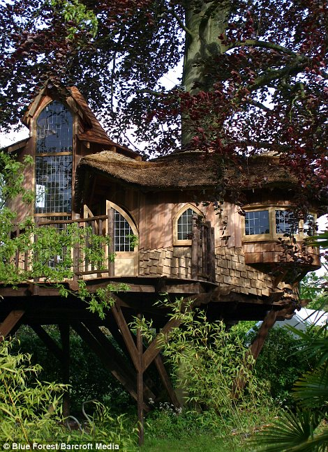 Live In A Treehouse